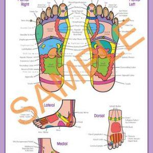 reflexology foot chart poster